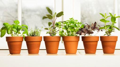 Le piante aromatiche in vaso | eColdo